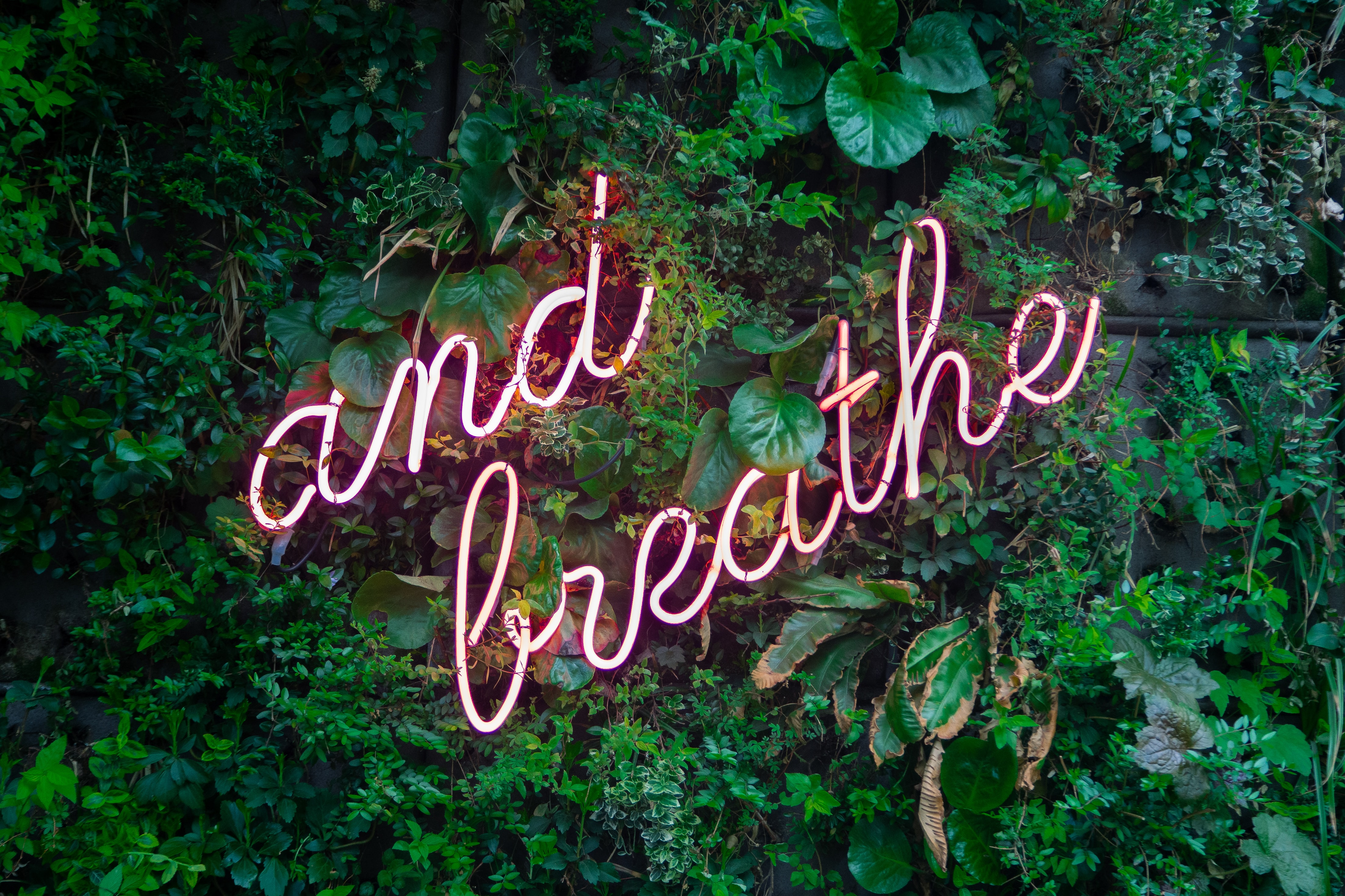 A wall of plants with And Breathe written in neon.